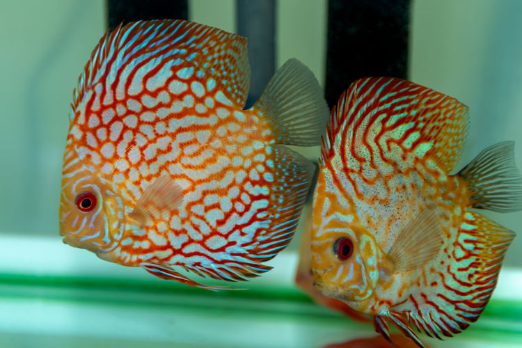 Animal Fish Animal Themes Close-up Vertebrate Animal Wildlife Transparent Sea Swimming Indoors  Animals In Captivity Focus On Foreground Glass - Material Group Of Animals Sea Life No People Water Animals In The Wild Underwater Marine