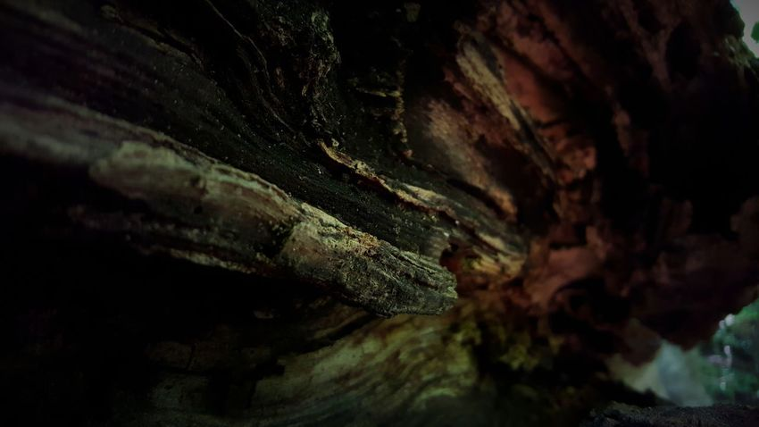 Inside of a rotting branch. PhotographybyTripp Smartphone Photography Phoneography Samsung Galaxy Note 5 Camera360Ultimate Pixlr Beastgrip Pro TreePorn Tree_collection  Rotten Wood Unique Perspectives Unique Style Creative Photography Creative Shots Check This Out Mothernature Nature_collection Selective Focus Manual Focus EyeEm Gallery Nature_collection
