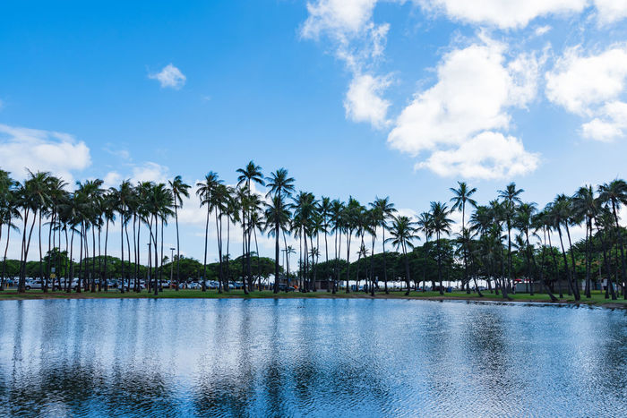 Alamoana Amazing Backgrounds Beach Beachphotography Beauty In Nature Blue Cloud - Sky Healing Horizon Landscapes Natural Nature Outdoors Palm Tree Park Photography Relax Scenics Sea Sky Slow Life Tranquility Tree Water