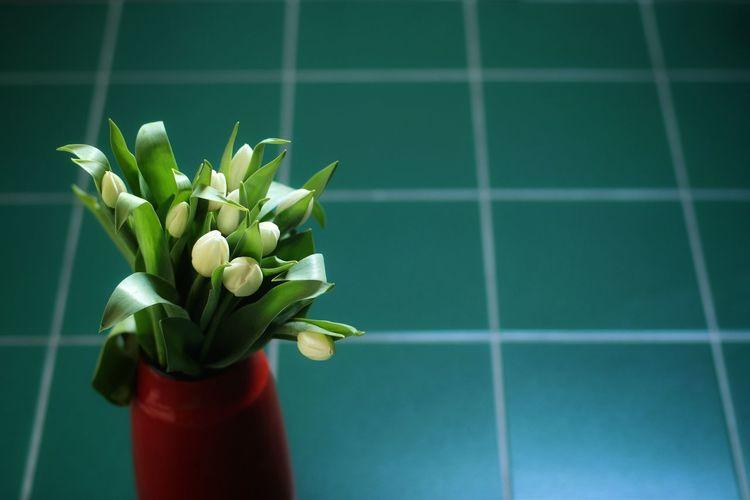 Close-up of rose flower vase on floor