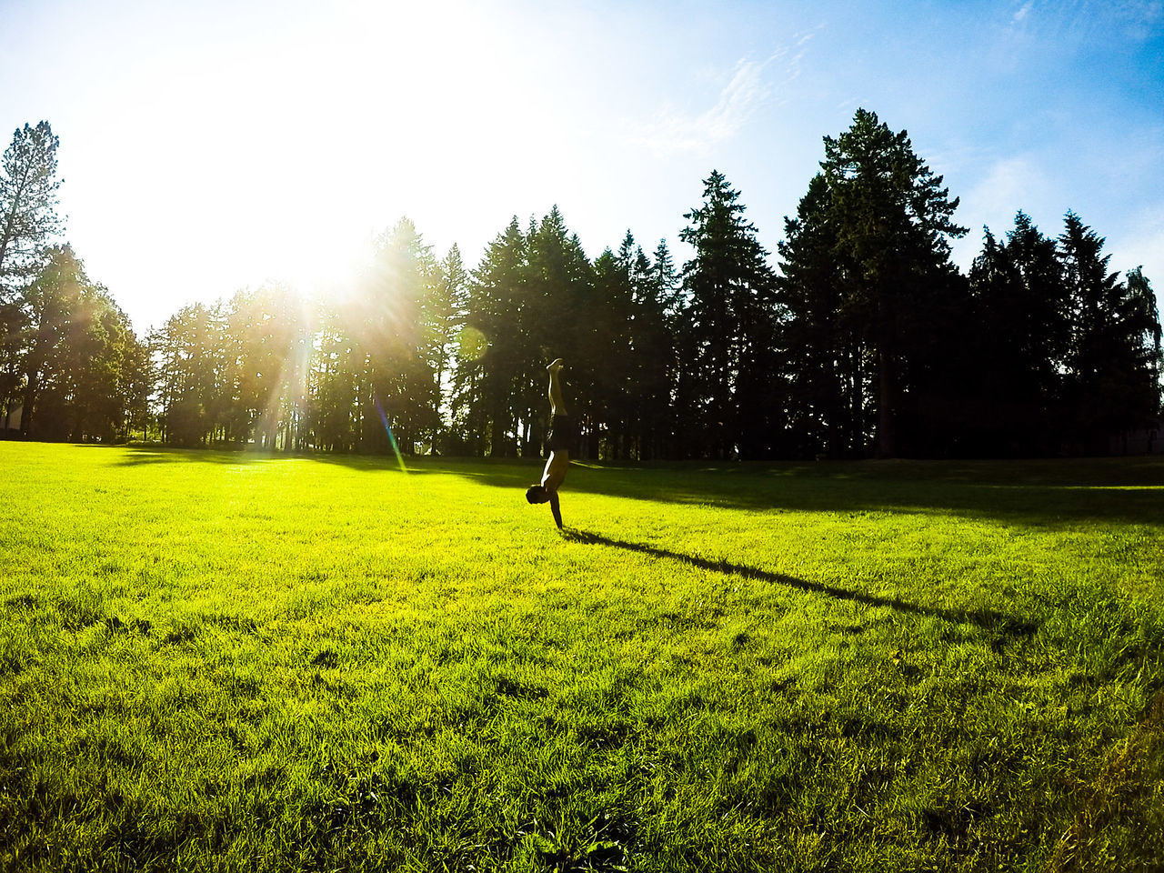 growth, tree, grass, nature, green color, sunlight, field, leisure activity, beauty in nature, tranquility, real people, lifestyles, scenics, sport, men, outdoors, day, one person, sky, sportsman, people