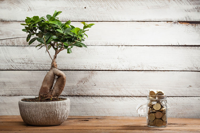 Overflow Planning Bonsai Cash Decoration Finance Flower Pot Full Growth Houseplant Indoors  Investment Jar Money Nature Personal Plant Potted Plant Savings Table Tree Wall - Building Feature Wood - Material