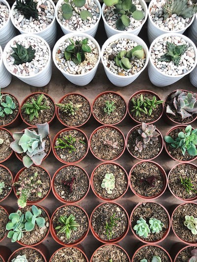 Plants for sale at market