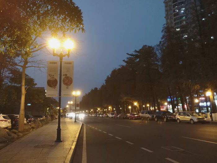 The Street Photographer - 2016 EyeEm Awards Tree Night Street Light The Way Forward City Outdoors In The Evening