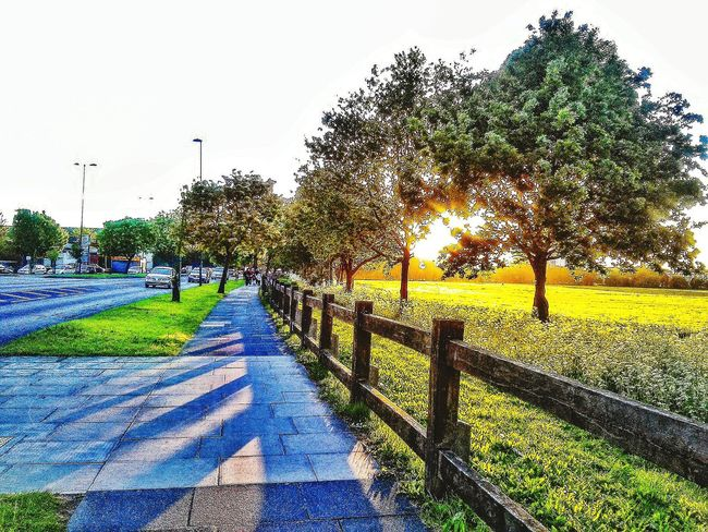 May every shadow vanish to shine bright and every every sorrow melt into happiness... Have a blessed weekend friends !! EyeEm Nature Lover Sun ☀ Sunshine ☀ Nature By My Side Beautiful Day Light And Shadow Meadowlands Creative Light And Shadow