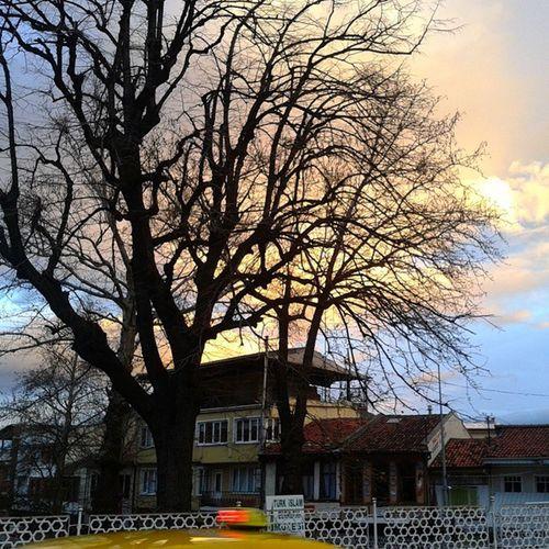 Sabah rüzgarlı havadan sonra manzara müthiş Manzara Yeşil Bursa şible rüzgaralizegoidbestbettervscocamvsgüzelpanaromakameramcameraağaçtreeskyyellowbluedreamhopeokulyolustreettaksitaxihistoryschool