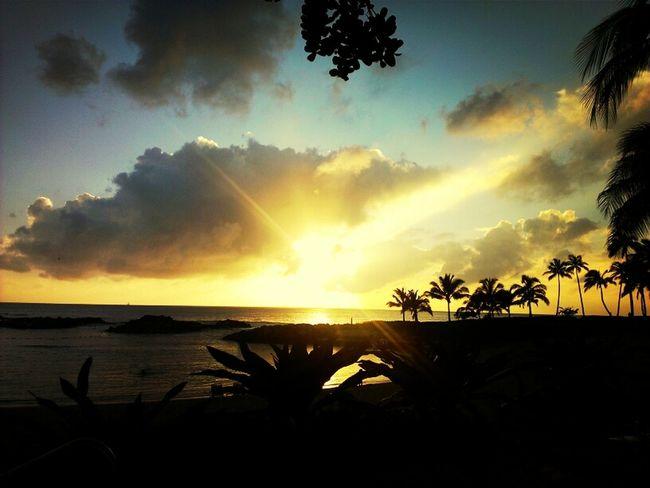 Lovely Sunset Beautiful Paradise Palm Trees Hawaii Oahu Heavenly Sky And Clouds Golden Hawaiinei