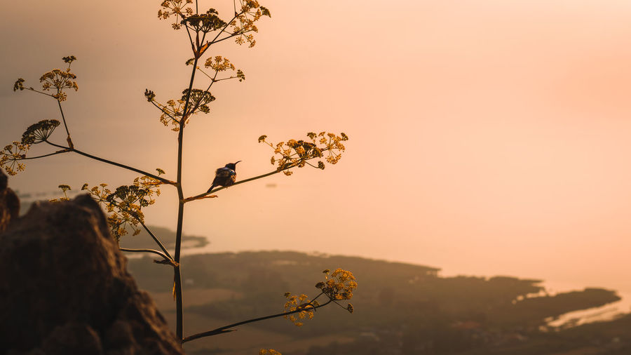 Bird perching on plant during sunset