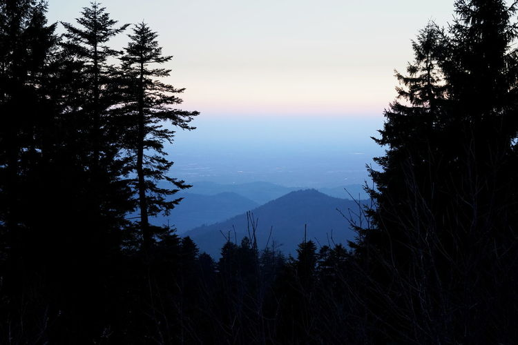 Silhouette trees by mountains against sky during sunset