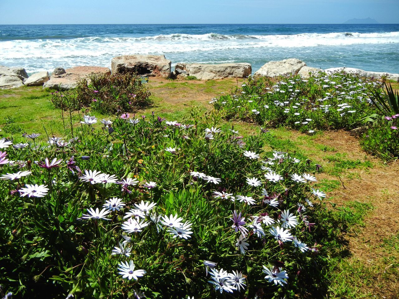 SCENIC VIEW OF SEA AND PLANTS ON SHORE