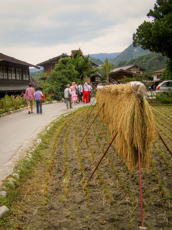 Gifu Japan Lifestyles Mountain Rice Harvesting Ricefield Rural Scene Shirakawa-go Shirakawago Travel Destinations Village