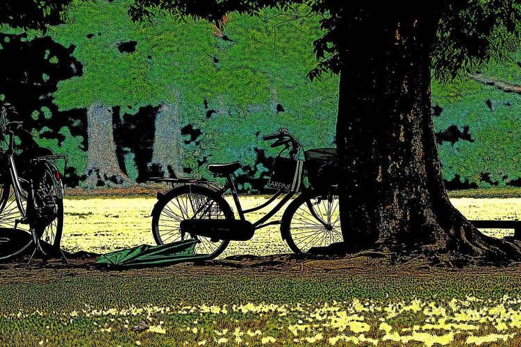 Bicycle Transportation Mode Of Transport Land Vehicle Stationary Outdoors Day No People Tree Nature