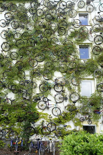 Architecture Bicycle Branch Building Exterior Built Structure Day Green Color Growth Ivy Large Group Of Objects Leaf Many Nature No People Outdoors Plant Tree