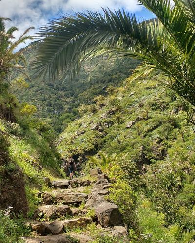 trekking through la gomera on a nature walk Man Versus Nature Man V Nature Man Vs Nature Walking Trail Hiking Trail Gomera La Gomera, Canary Islands La Gomera Hiking In Gomera Hermigua El Cerdo Nature Tree Beauty In Nature Outdoors Green Valley Scenics Lush Green Let's Go. Together. Trekking Perspectives On Nature An Eye For Travel Love Yourself
