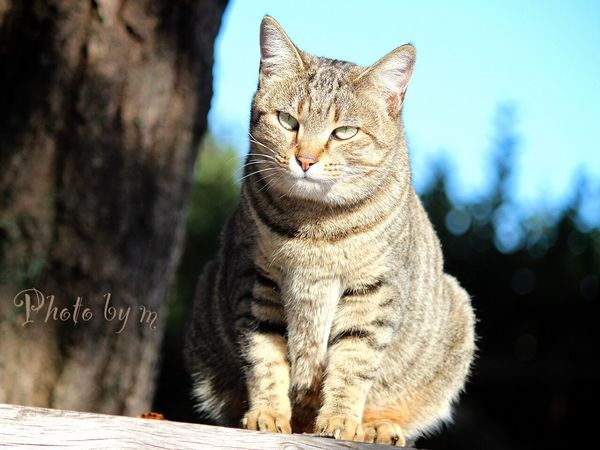 Cat Cat♡ 野良猫 Stray Cat 猫 キジトラ Animal Cat Lovers Photography ローアングル