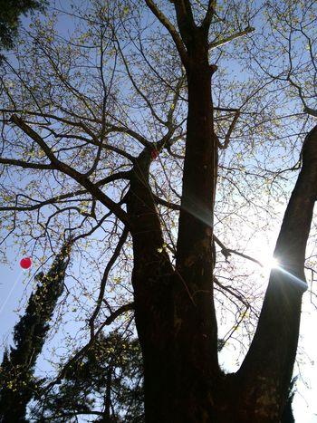 Allah ❤❤ Tophane Bursa Türk Bayrağı Balon