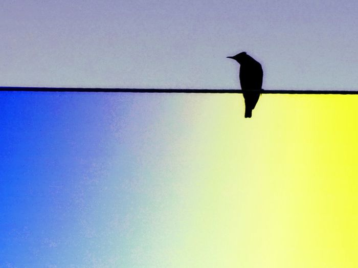 Bird On A Wire Colour Blue Yellow Abstract Perspective Filter Light And Shadow Edit Fun Pause Naturelovers Streetphotography Nature Spread Wings Raven - Bird Bird Of Prey Water Sky Starling Blackbird