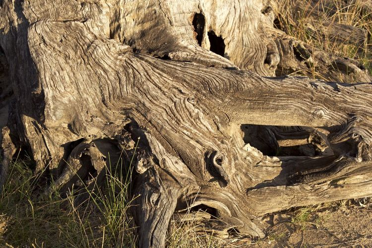 Grass Mildura,Victoria,Australia Weathered Arid Climate Beauty In Nature Close-up Day Gum GumTree Landscape Mildura Nature No People Outdoors Physical Geography Sunset Textured  Tree Tree Trunk Trunk Weathered Wood