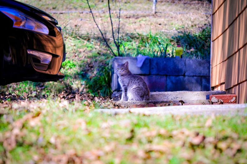 Little cat Little Cat Plant Nature Day Field Land Motor Vehicle Car Grass No People Outdoors Selective Focus Land Vehicle