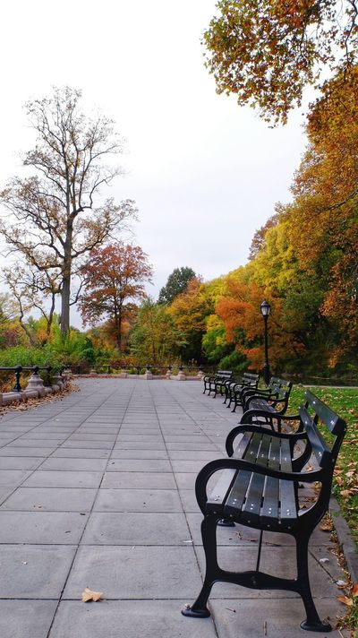 As fall begins to happen. Empty Benches Park - Man Made Space Solitude Relaxation Scenics Paving Stone Walkway Photography 📷=🖌🎨