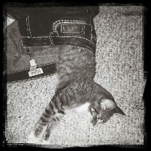 My Cat Wears Pants