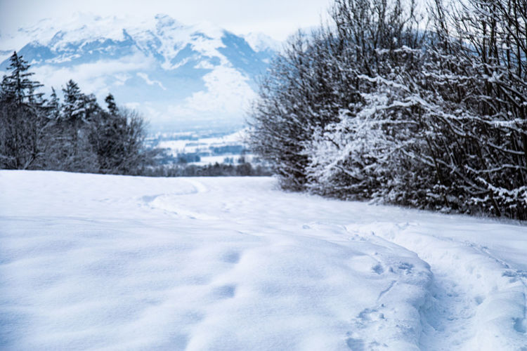 Snow Cold Temperature Winter Tree Plant Nature White Color Scenics - Nature No People Beauty In Nature Day Tranquility Tranquil Scene Environment Land Frozen Non-urban Scene Outdoors Landscape Extreme Weather Snowing Blizzard Pine Tree Coniferous Tree