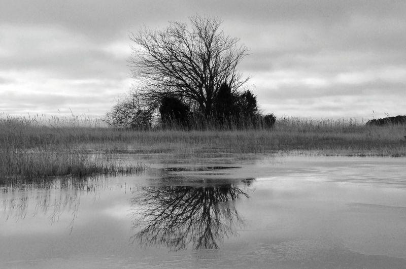 Sweden Tree