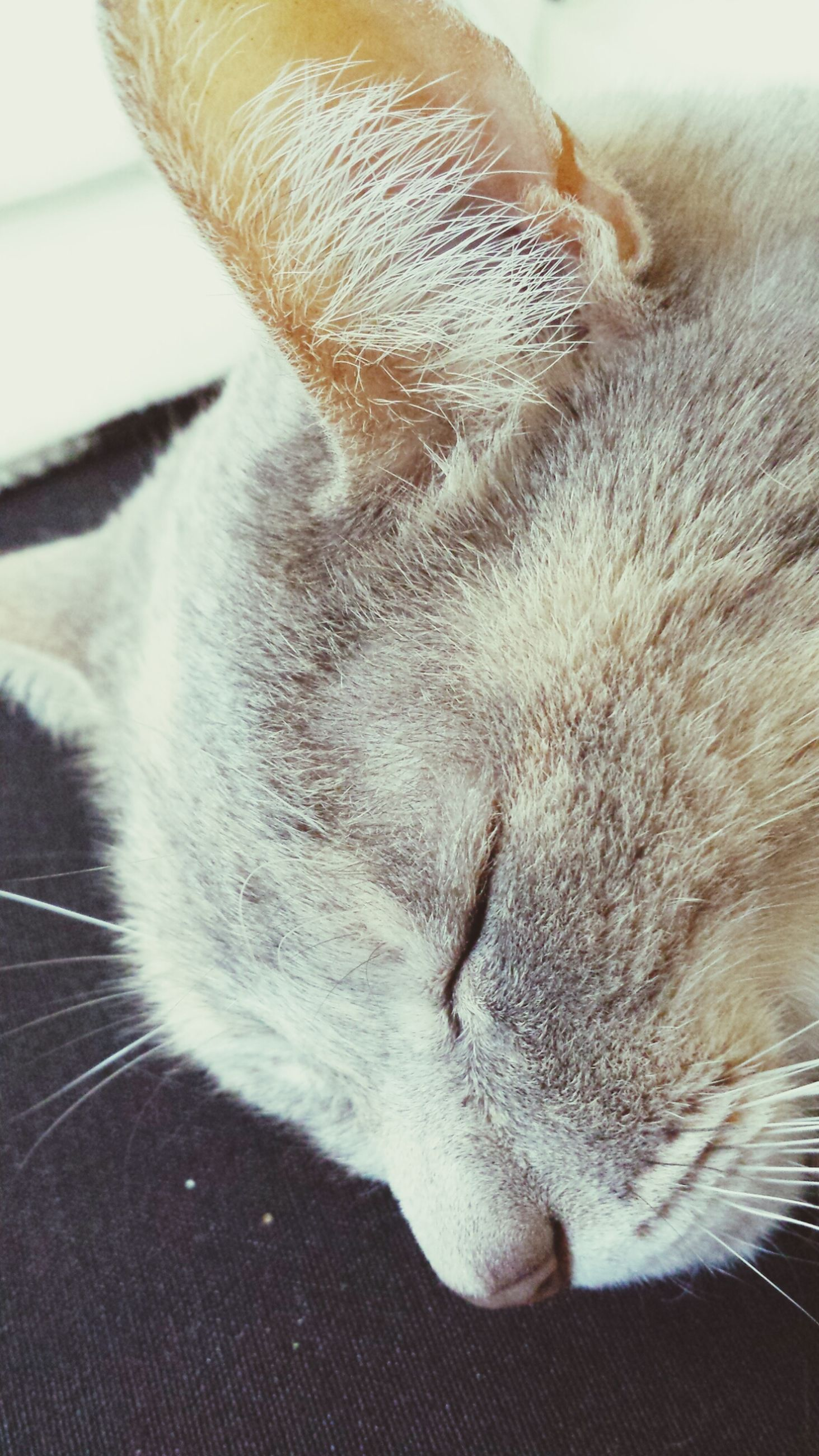 domestic cat, domestic animals, pets, one animal, animal themes, cat, mammal, feline, indoors, whisker, close-up, relaxation, sleeping, animal body part, animal head, resting, lying down, eyes closed, part of, high angle view
