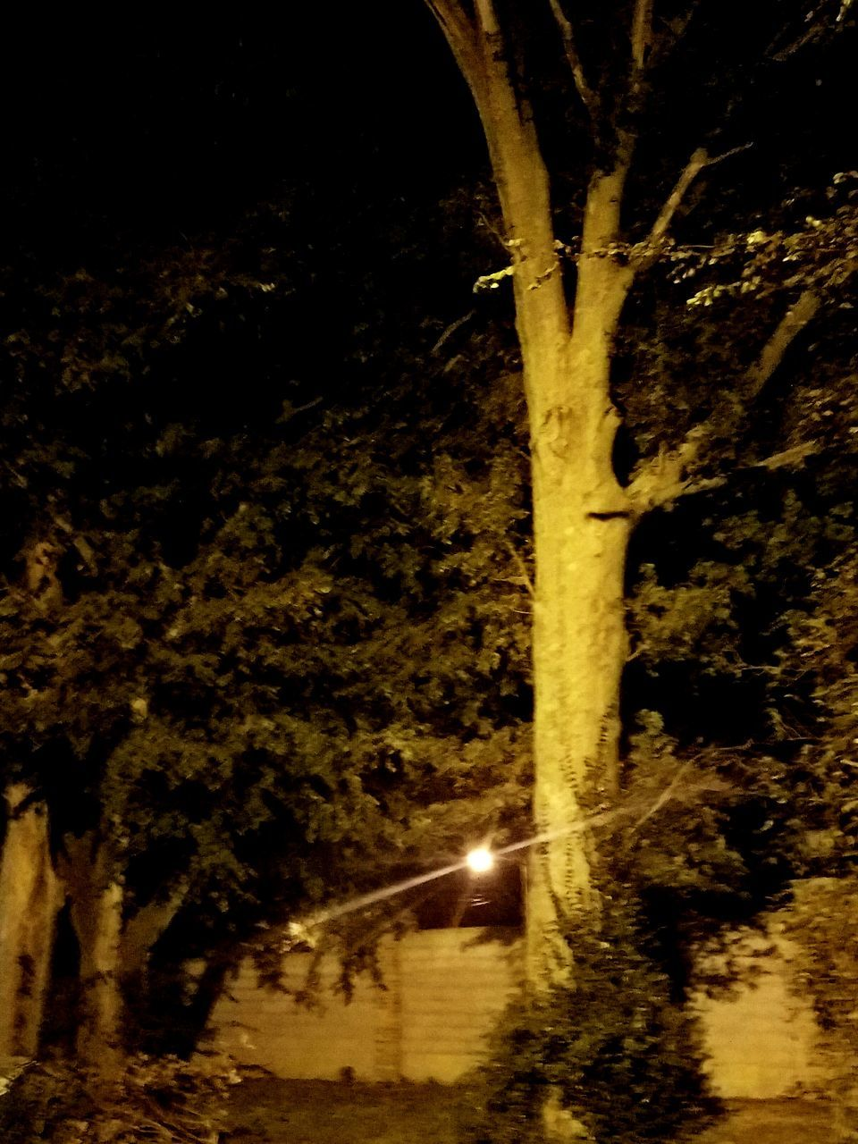tree, night, illuminated, no people, nature, tree trunk, outdoors, beauty in nature, scenics, close-up, branch