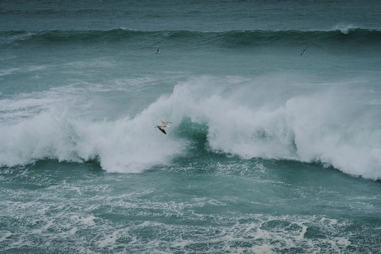 Sea Wave Water Motion Power In Nature Beauty In Nature Outdoors Seagull Birds Flying Flying Bird Wildlife Wild Travel Photography