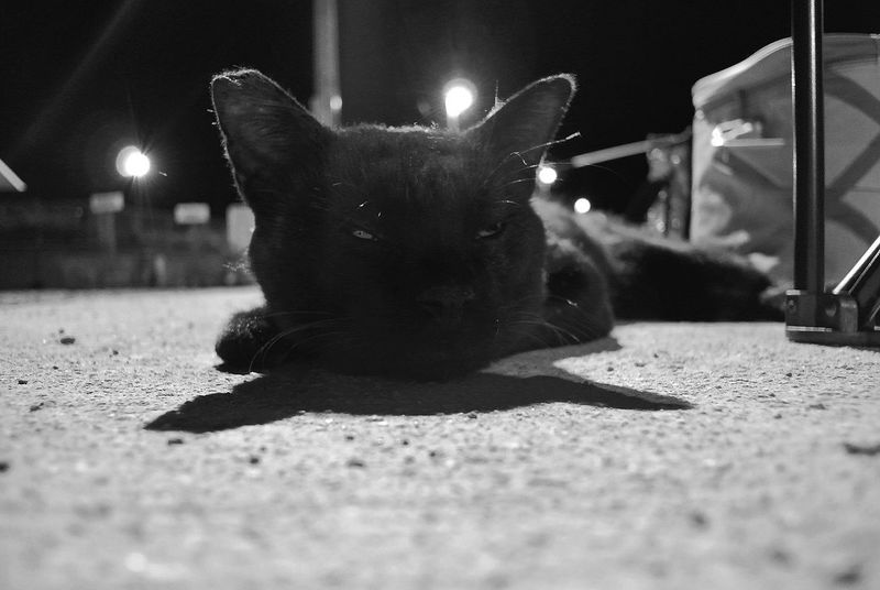 BLackCat Stray Cat