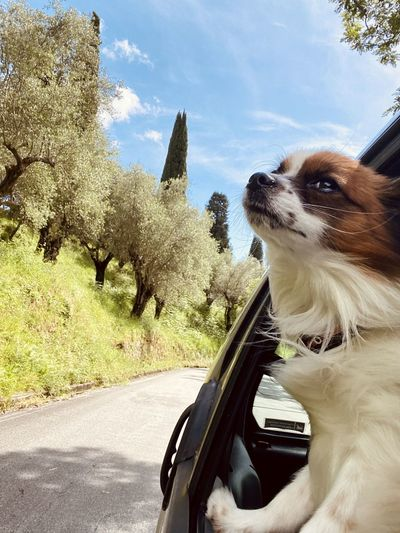 View of dog on road