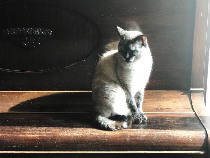 Wood - Material One Animal Animal Themes Animal Mammal Domestic Animals Pets Domestic Cat Domestic Cat Sitting Sunlight
