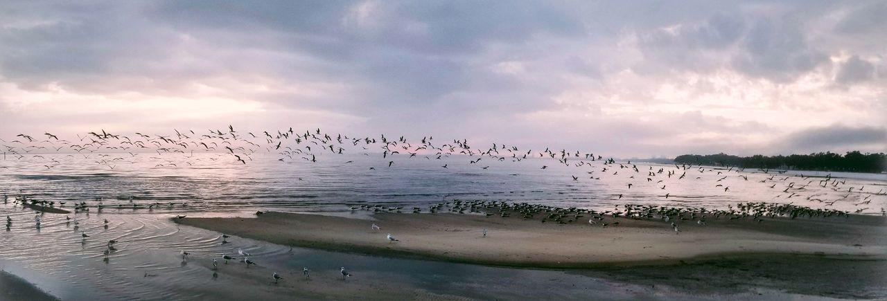 Beach Flock Of Gulls Large Group Of Animals Animals In The Wild Bird Animal Wildlife Beach Nature Landscape