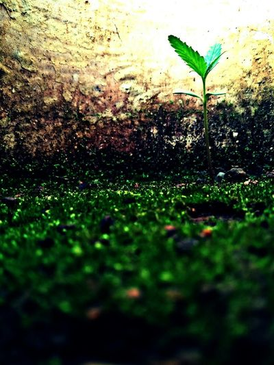 Life Beauty Redefined My Plant My Sight Eyeforphotography Go Green