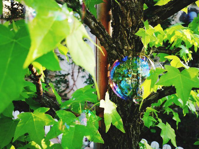 Bubbles Bubble Soap Bubbles Narure Childhood Springtime Tree Leaf Multi Colored Close-up Plant