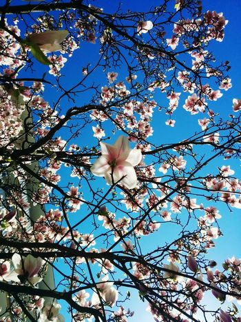Spring Into Spring Fresh 3 Muenchen Eye4photography  EyeEm Best Shots EyeEm Nature Lover Spring Spring Flowers EyeEmFiveSenses Shootermag