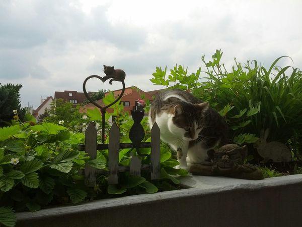 Langsam wird es Sommer. Enjoying Life Cat Home Sweet Home