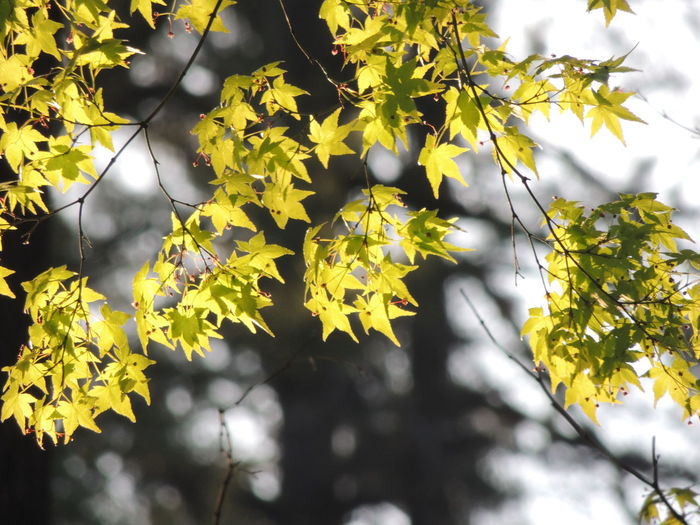 Low angle view of leaves on a tree