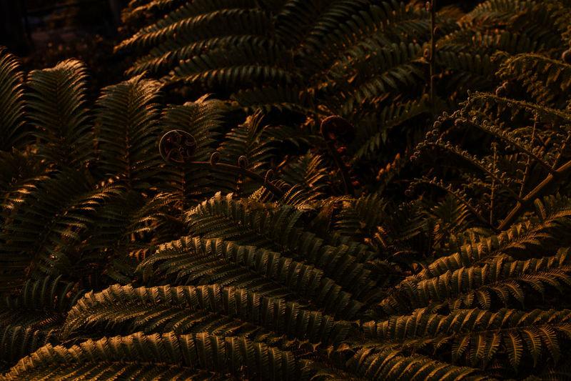 Full frame shot of fern tree