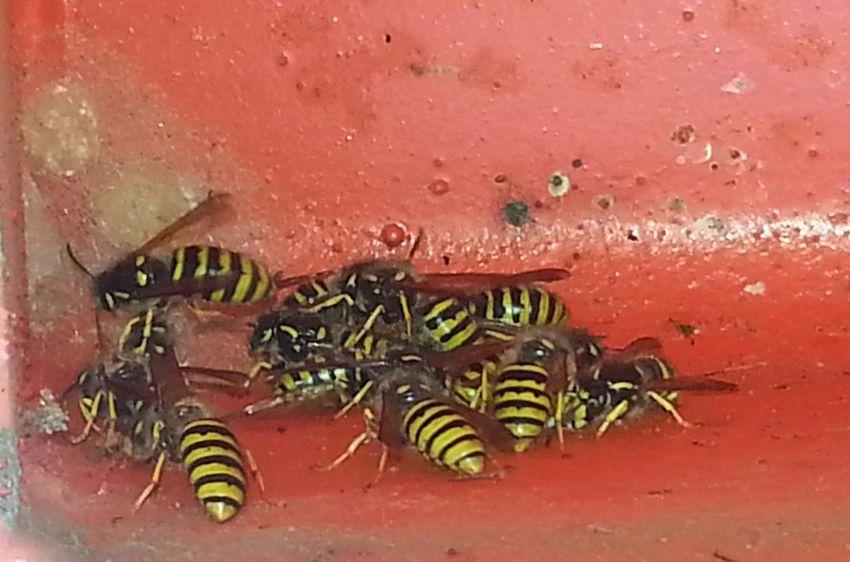 Taking Photos Wasp Wasps Wasps Nest EyeEm NIKON D5300 Nikon D5300 Photographer Photography Pentaxamania EyeEm Best Shots - Nature Wildlife Photography