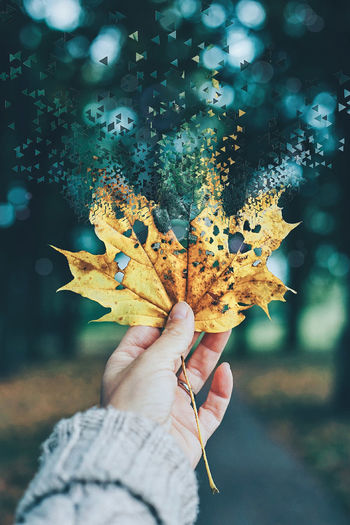 Human Hand Human Body Part Autumn One Person People Leaf Adult Holding Adults Only Nature Only Women Day One Woman Only Outdoors Beauty In Nature Close-up Animal Themes UnderSea Autumn Leaves Eyemphotography Autumn Beauty In Nature Fragility Nature Capture The Moment
