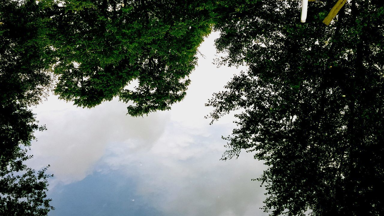 tree, nature, growth, beauty in nature, low angle view, sky, no people, day, tranquility, scenics, outdoors, forest, branch
