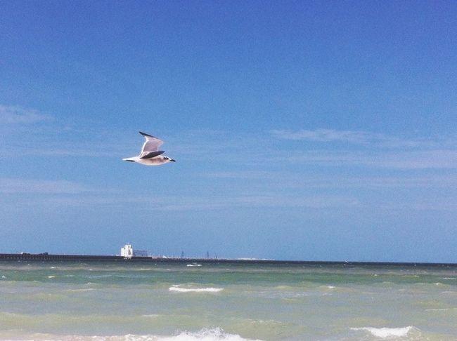 Sea Relaxing Beautiful Nature Mérida Yucatán Beach Sunshine I Love It ❤