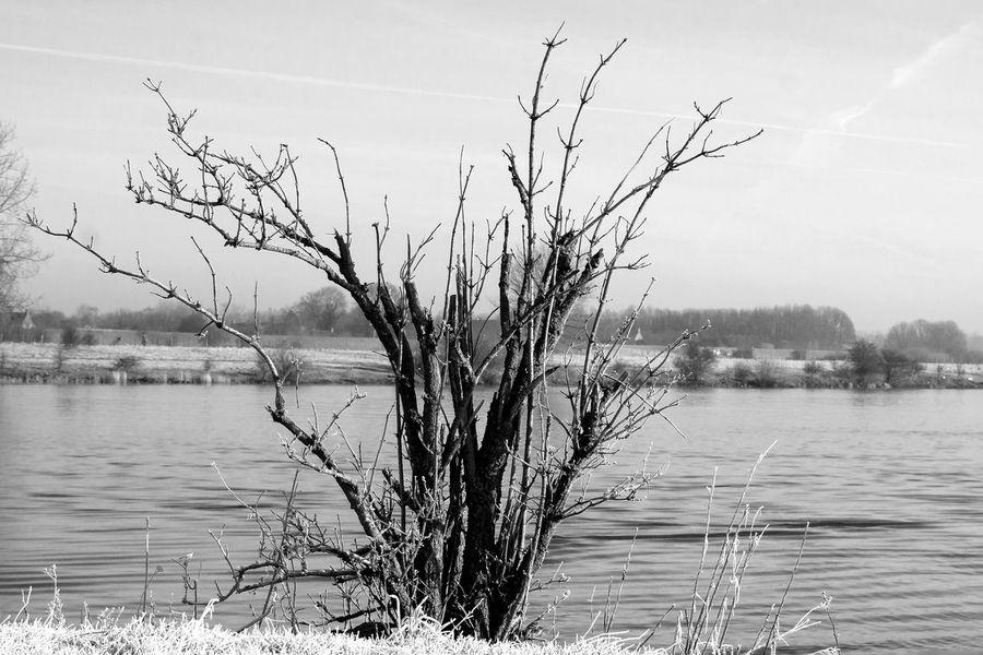 Blackandwhite Nature Maas Uiterwaarden