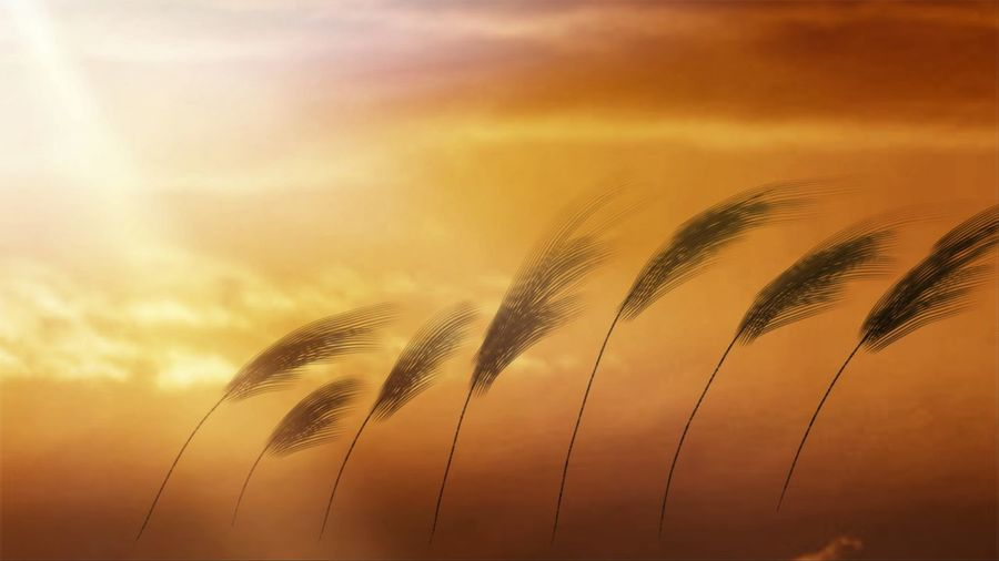 It is a symbol of light from the sun and beautiful grass flowers. a symbol of travel to good things