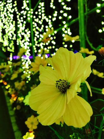 Flower Flowerporn 花 Iphoneonly