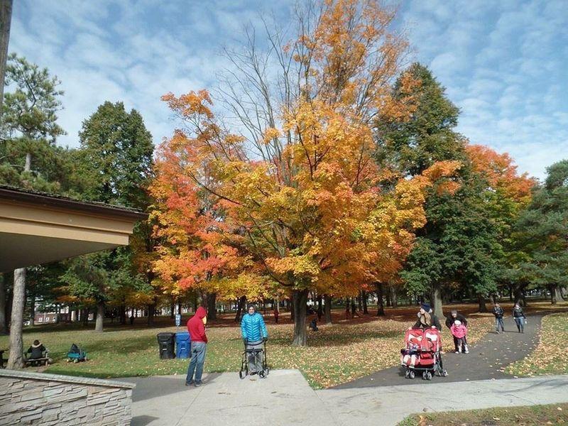 Autumn colours in Highpark Toronto Ontario 467914