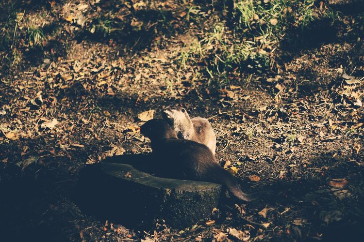 Animal Head  Animal Themes Day Death Domestic Animals Field Mammal Nature No People Non-urban Scene One Animal Outdoors Tranquility Tree Trunk Zoology