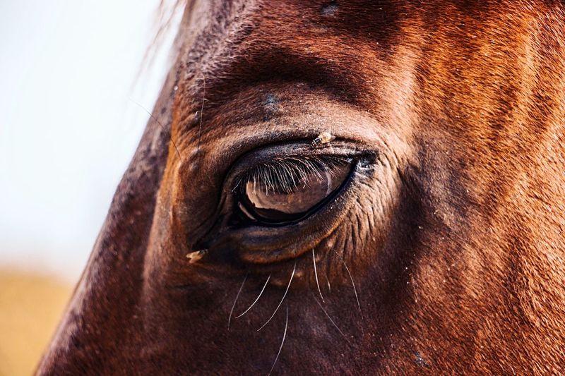 Close-up Mammal